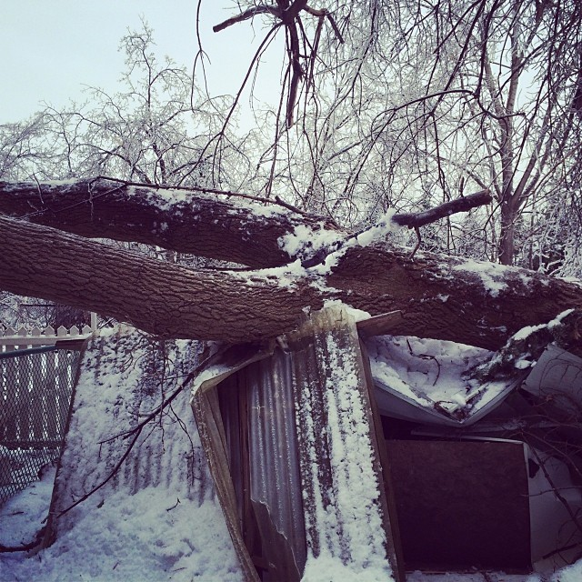 You know it's bad when the insurance adjuster says holy crap, that's a big tree... {via Instagram}